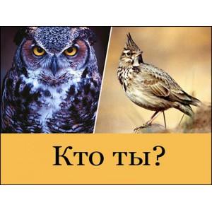 «Совы», «жаворонки» и «голуби» - выбор матраса для людей, живущих в разных ритмах.